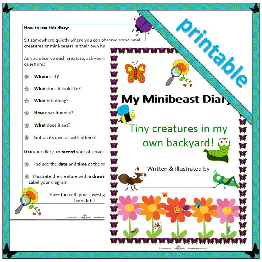 minibeast diary of observations