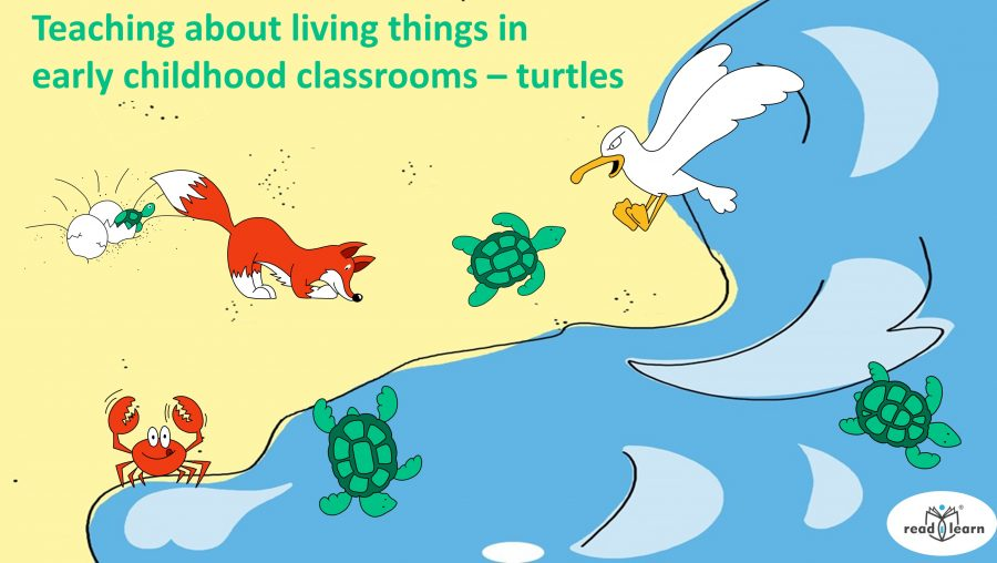 the importance of teaching about living things in early childhood classrooms, focusing on sea turtles